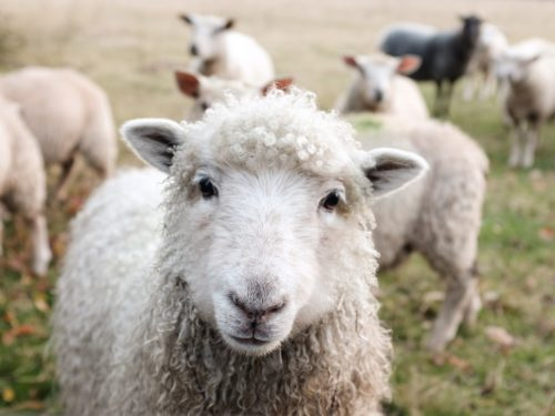 100+ Words for Animals in French with Fun Cultural Tidbits